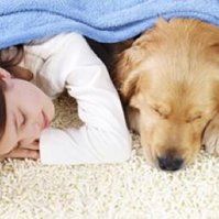 Natural-Carpet-Cleaning-for-Pets